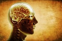 Brain boosting bioactives, Part 2: From citicoline and curcumin to resveratrol