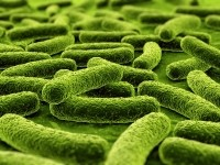 Lactobacillus fermentum's immune benefits show 'potential to augment healthy aging'