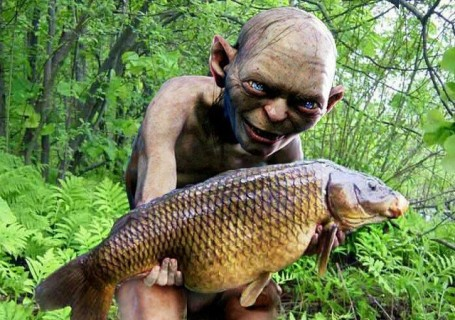 One vitamin to rule them all gollum s d deficiency dilemma for All fish diet