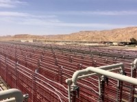 Algatechnologies made its name with high quality astaxanthin derived from Haematococcus pluvialis microalgae grown glass tubes in Eilat in Southern Israel